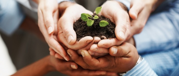 photodune-202925-business-development-hands-holding-seedling-in-a-group-m